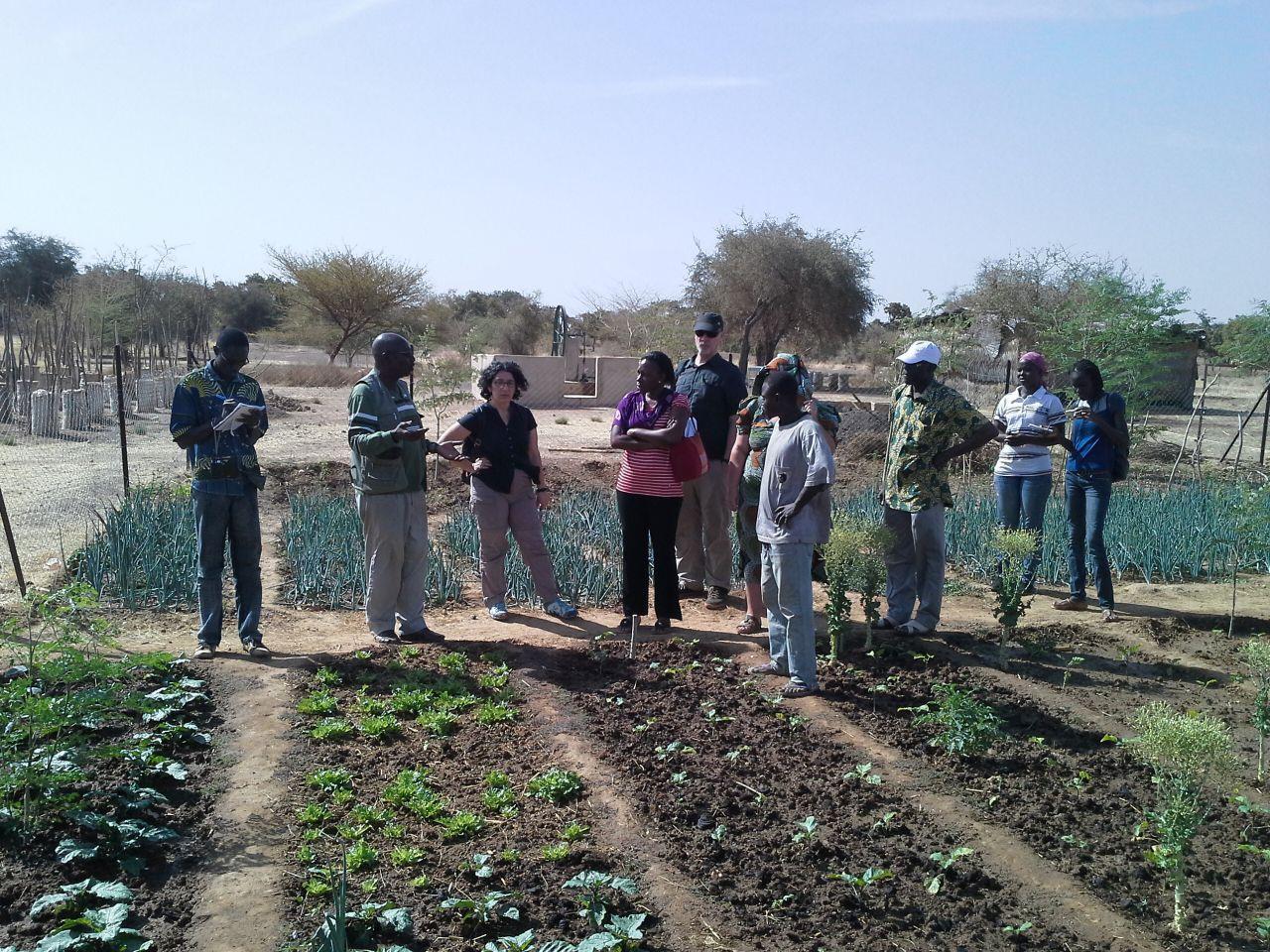 Bioversity International sur le site de Loumbila pour une meilleure connaissance