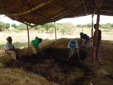 Yelemani : la croisade de Blandine Sankara et les siennes pour une souveraineté alimentaire au Burkina Faso