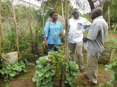 YELEMANI visite un jardin hors sol au Centre National de Semences Forestières : une innovation qui serait sans doute profitable aux femmes de la ferme agricole de Yelemani